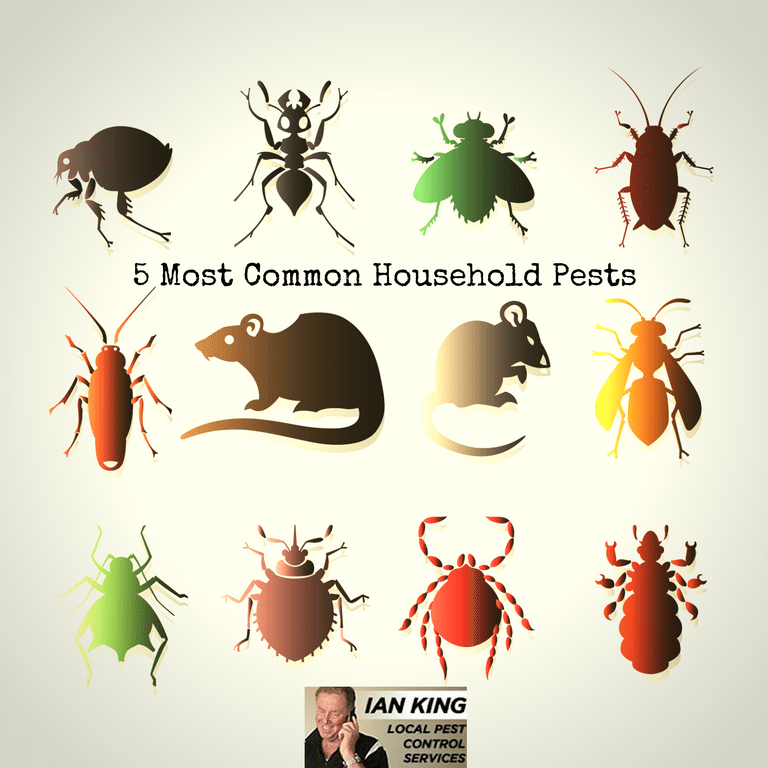 5 Most Common Household Pests