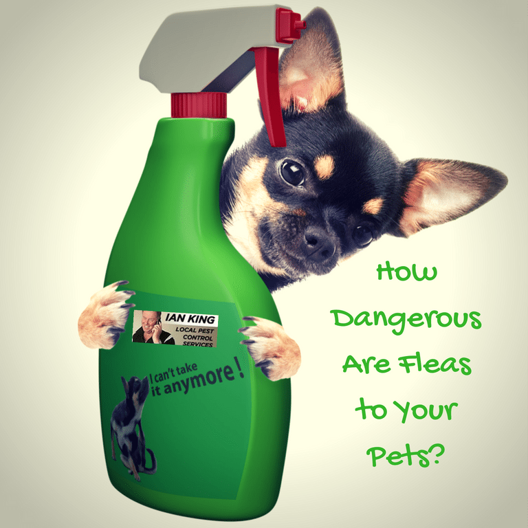How Dangerous Are Fleas To Your Pet