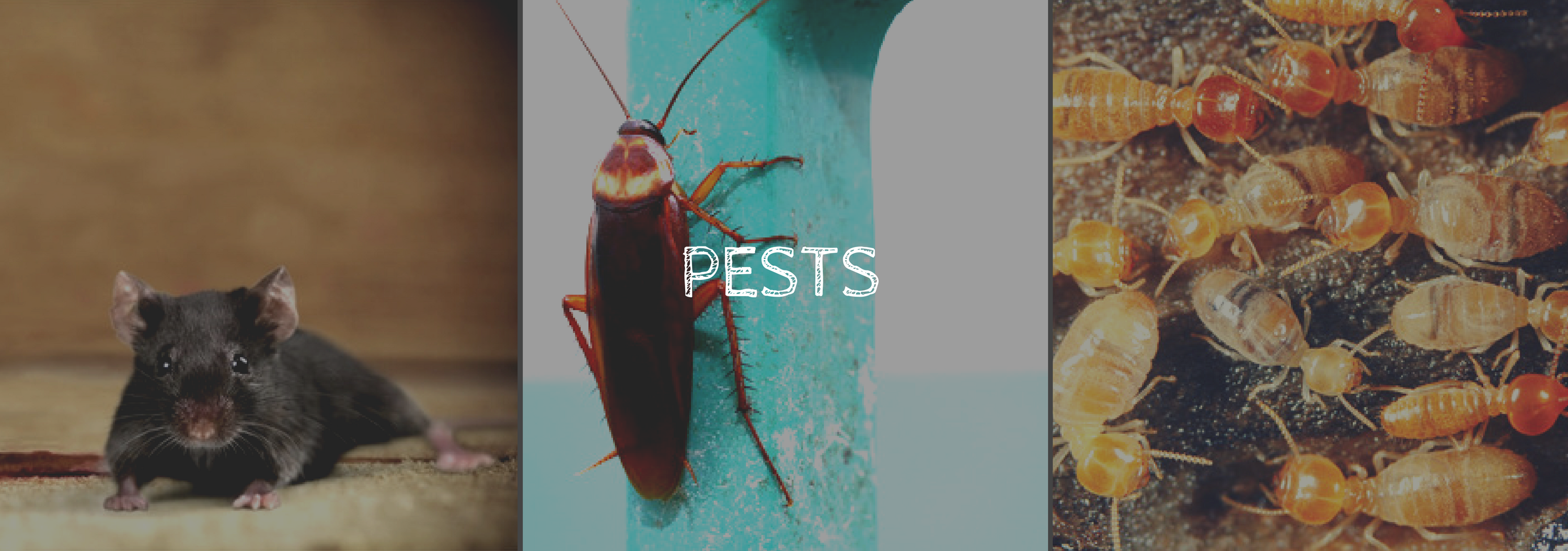 5 MOST COMMON HOUSEHOLD PESTS -