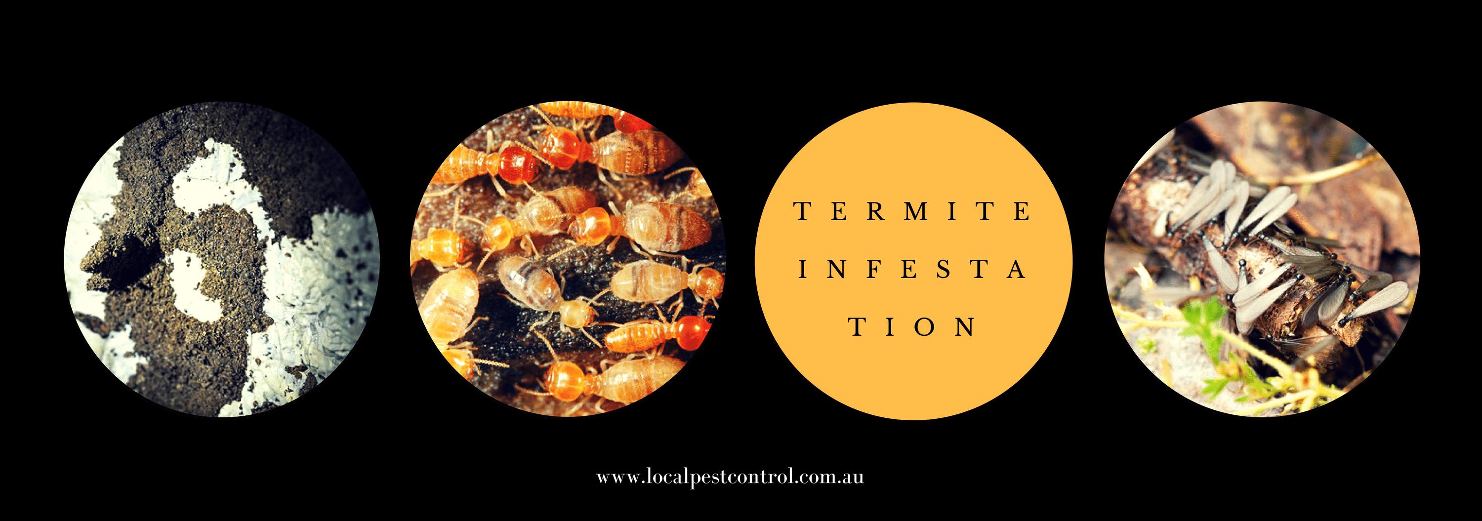 SIGNS AND CAUSES OF HOME TERMITE INFESTATION -