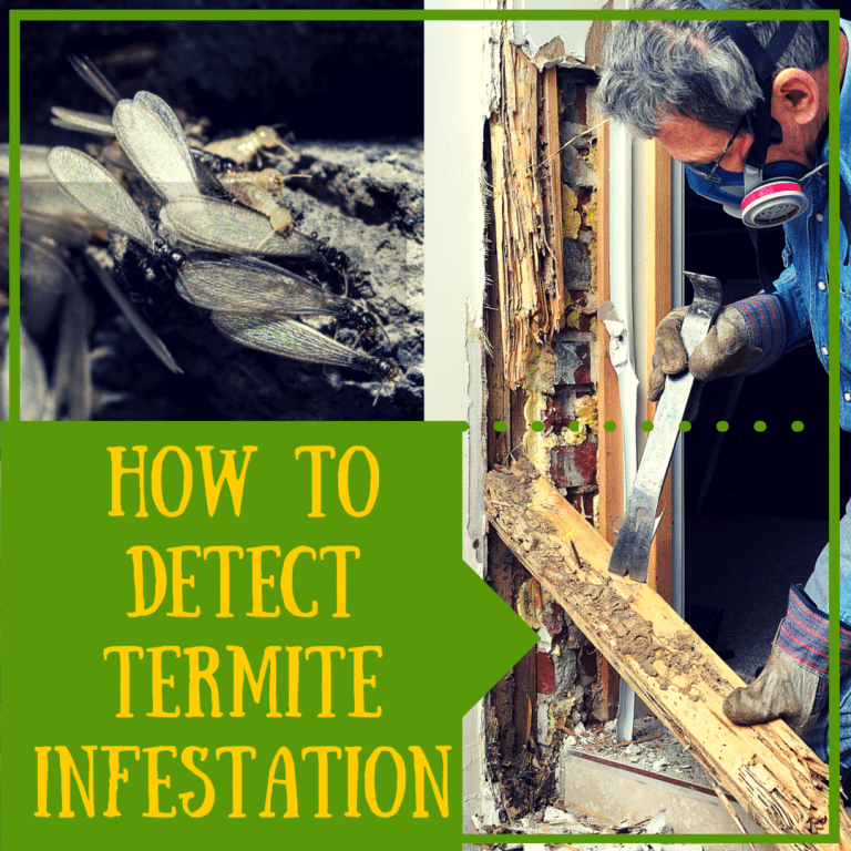 How To Detect Termite Infestation