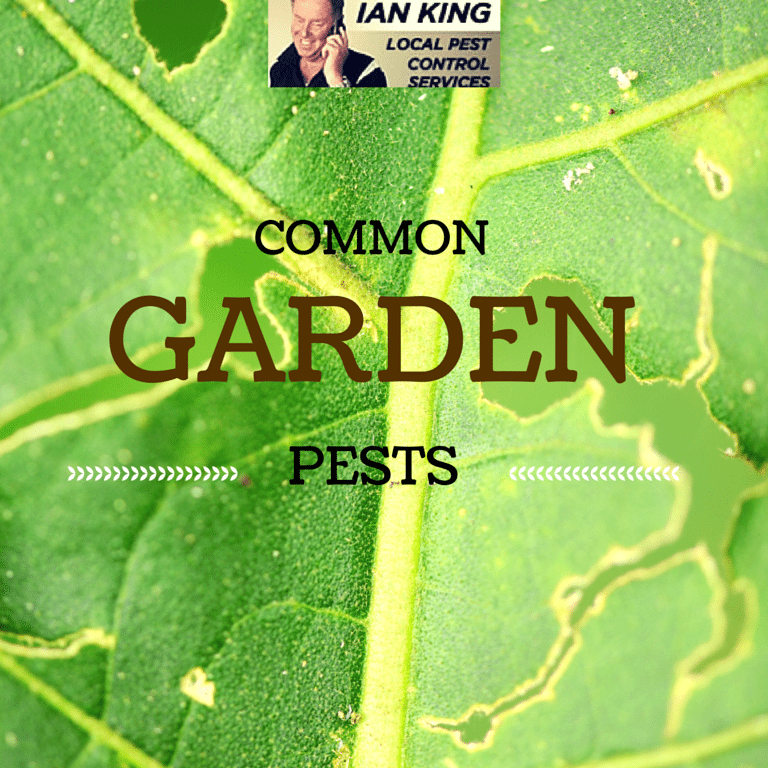 Be On The Lookout For These Common Garden Pests