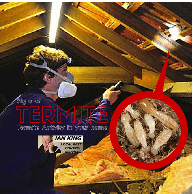 Signs of Termite Activity In Your Home